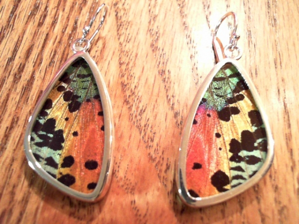 Earrings by Butterfly Collection